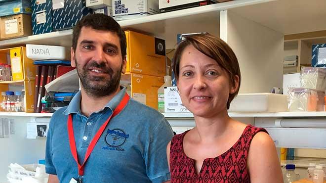 �lvaro Ayt�s y Katia Ruggero, investigadores del Idibell de Barcelona.